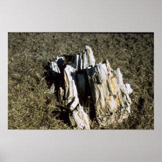 瑪瑙の化石のベッド公園# 35685 ポスター