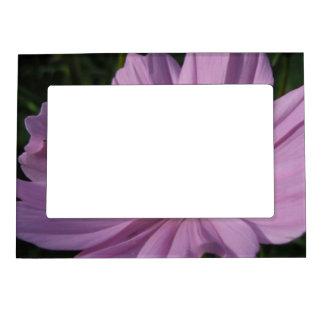 甘いピンクのCosmocosmosのcosmo、自然植物の、蜂 マグネットフレーム