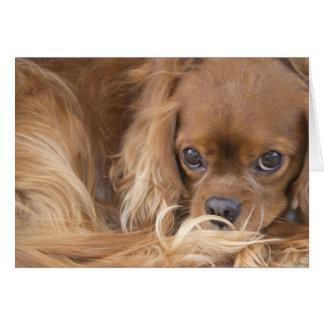甘いルビー色の無頓着なチャールズ王スパニエル犬 カード