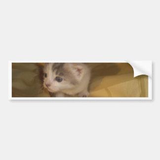 甘い子ネコ バンパーステッカー