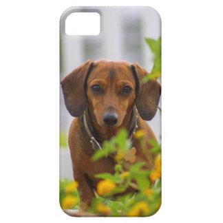甘い小型赤いダックスフント iPhone SE/5/5s ケース