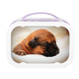 甘い犬 ランチボックス