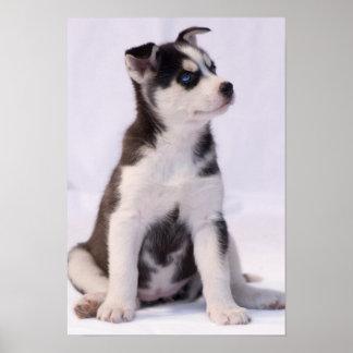 甘い赤ん坊の子犬 ポスター