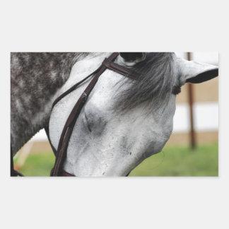 甘いAppaloosaの馬 長方形シール