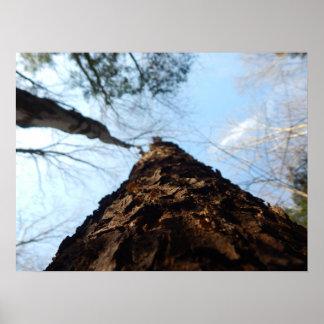 甘いarrow湖-ペンシルバニア ポスター