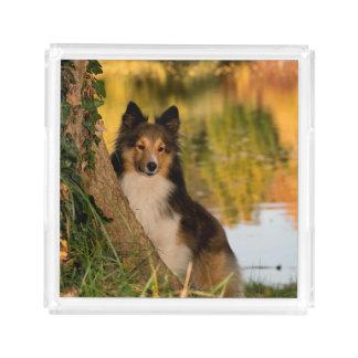 甘くかわいい犬 アクリルトレー