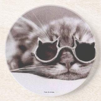 生きた最もクールな猫: コースター