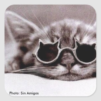 生きた最もクールな猫- sqareのステッカー スクエアシール