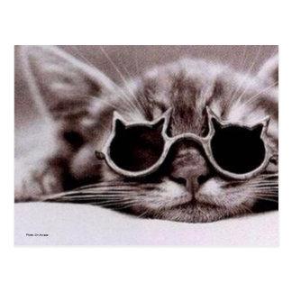 生きた郵便はがきの最もクールな猫 ポストカード