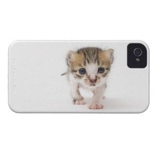 生まれたばかりのな子ネコ Case-Mate iPhone 4 ケース