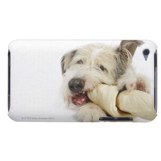 生皮の骨でかみ砕いている犬 Case-Mate iPod TOUCH ケース