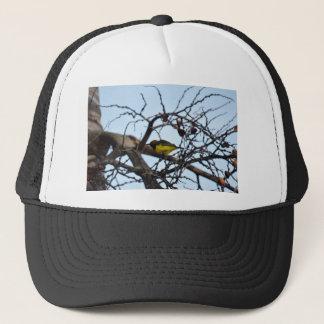 田園クイーンズランドオーストラリアのオリーブによって支持されるSUNBIRD キャップ
