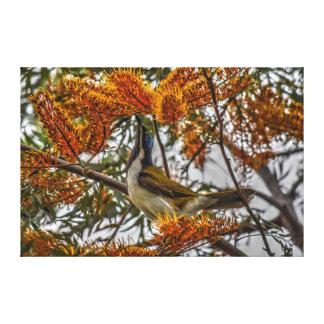田園クイーンズランドオーストラリアのバナナの鳥 キャンバスプリント