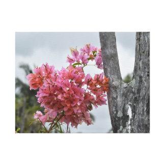 田園クイーンズランドオーストラリアのブーゲンビリアのピンク キャンバスプリント