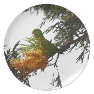 田園クイーンズランドオーストラリアの緑LORIKEET プレート