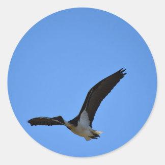 田園クイーンズランドオーストラリアを飛ばすトキ亜科 ラウンドシール