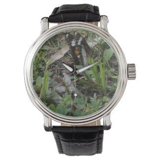 田園クイーンズランドオーストラリア蝶ブラウンの(昆虫)オオカバマダラ、モナーク 腕時計