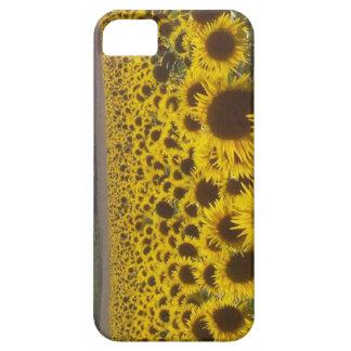 田園フランスのヒマワリ iPhone SE/5/5s ケース