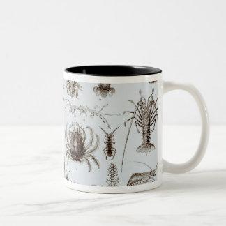 甲殻類および蜘蛛形綱 ツートーンマグカップ