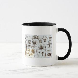 甲殻類および蜘蛛形綱 マグカップ