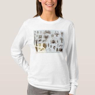 甲殻類および蜘蛛形綱 Tシャツ