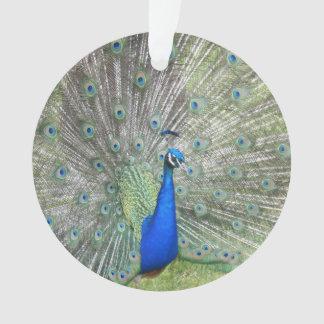 男性のインドの孔雀ファンそれは尾羽です オーナメント