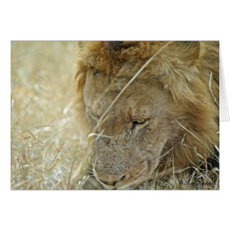 男性のライオンの挨拶状 カード