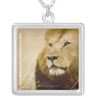 男性のライオン(ヒョウ属レオ)のポートレート、マサイ語マラ シルバープレートネックレス