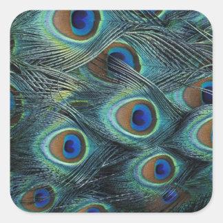 男性の孔雀の羽のパターン スクエアシール