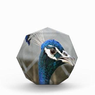 男性の孔雀の頭部 表彰盾