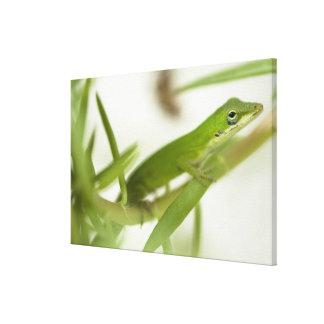 男性の緑のanole、aのAnolisのcarolinensis、 キャンバスプリント