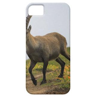 男性の野生の高山の、カプラのibex、かsteinbock iPhone SE/5/5s ケース