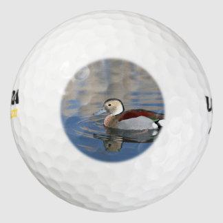 男性の青によって勘定書を出される環状のティール(緑がかった色)は池で泳ぎます ゴルフボール