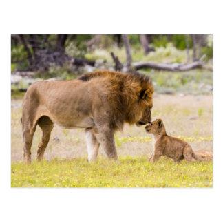 男性指導者のライオンは幼いこどもを点検します ポストカード
