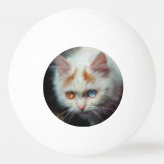 異様目のペルシャの子ネコ 卓球ボール