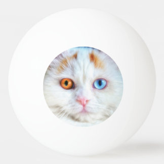異様目の白いペルシャ 卓球ボール