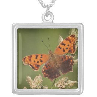 疑門符の蝶、Polygonia シルバープレートネックレス