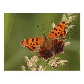 疑門符の蝶、Polygonia ポストカード