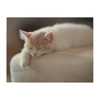 疲れたベージュおよび白い子ネコ ウッドウォールアート