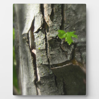 発芽の葉のイーゼルのプリント フォトプラーク
