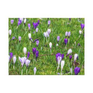 白いおよび紫色のクロッカスのキャンバスのプリント キャンバスプリント