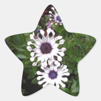 白いアフリカデイジー 星形シール・ステッカー