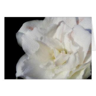 白いアマリリス カード