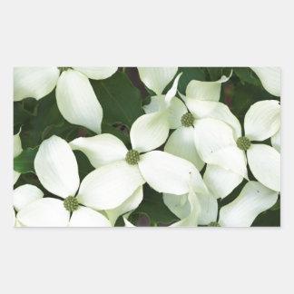 白いアメリカヤマボウシ 長方形シール
