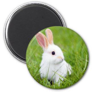 白いウサギ マグネット