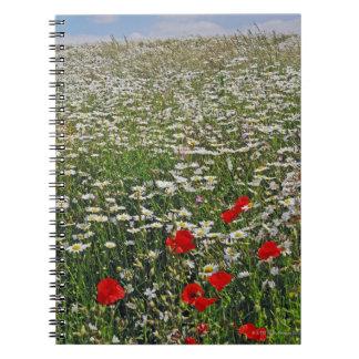 白いウシ目のデイジーの農地分野 ノートブック