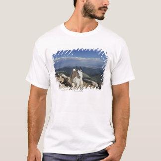 白いウールのロッキー山脈のヤギはの上に立ちます Tシャツ