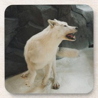 白いオオカミ コースター