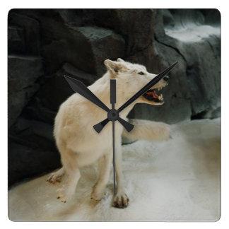 白いオオカミ スクエア壁時計