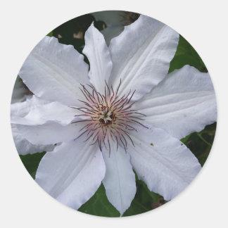 白いキヅタの花 ラウンドシール